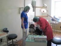 Молодые доктора в стоматологическом кабинете монастыря, май 2012 г.